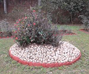 Euphorbia-milli