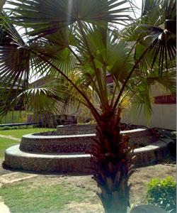 Palm-
